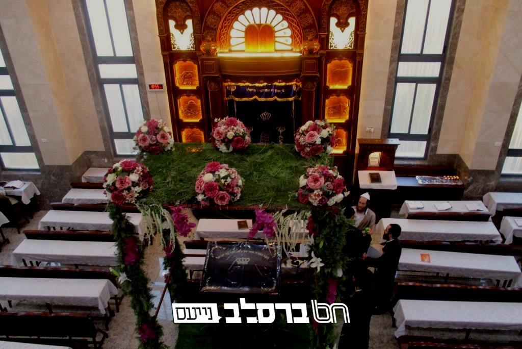 בית שמש • קישוט העשבים וענפי העצים בבית הכנסת ברסלב שבקריה החרדית