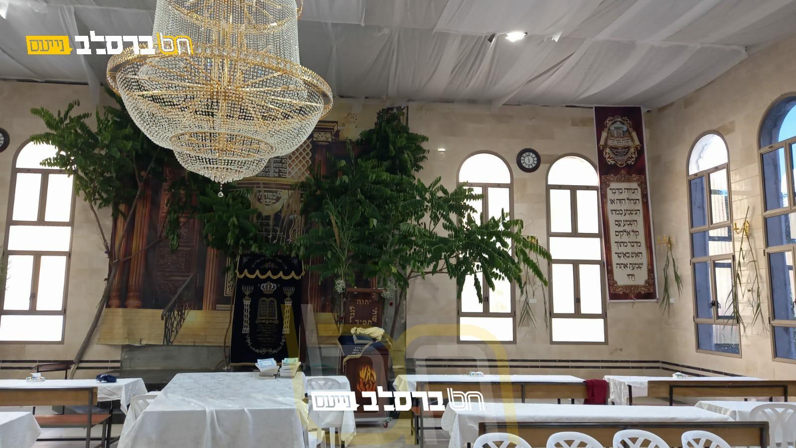חַג הַשָׁבוּעוֹת הַזֶּה • בית הכנסת 'פאר הנצח' בצפת מקושט לקראת החג